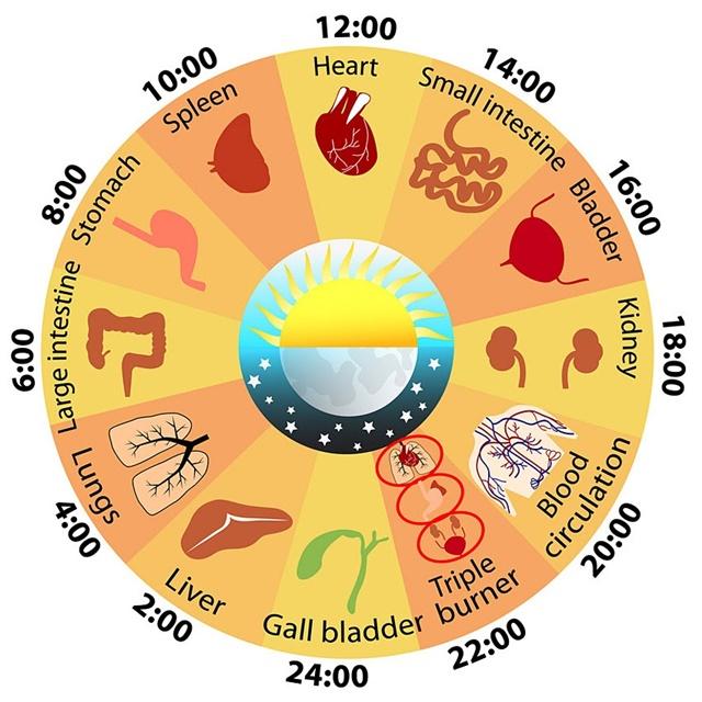 Nên bắt đầu giấc ngủ trước 23 giờ mỗi ngày để cơ thể hoàn thành trọn vẹn quá trình đào thải độc tố